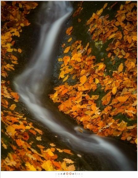 Bladeren bedekken de bosgrond en rotsen, behalve waar het water haar weg vindt (200mm, f/5,6, ISO100, 13sec)