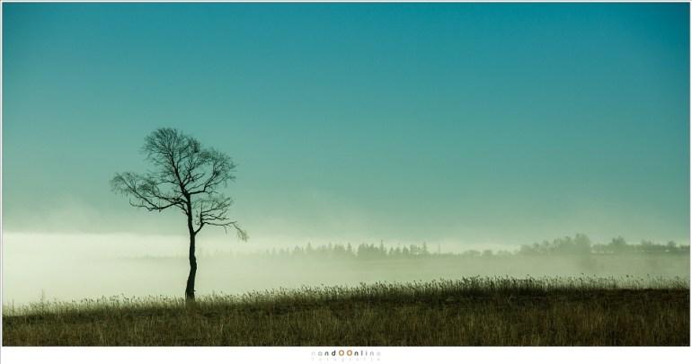 Een laatste herinnering aan een prachtige unieke ochtend (200mm; ISO100; f/8; t=1/1600sec)