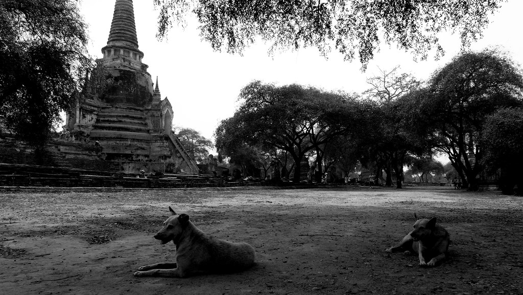 Thaïlande - Ayutthaya - 091 - Wat Phra Si Sanphet