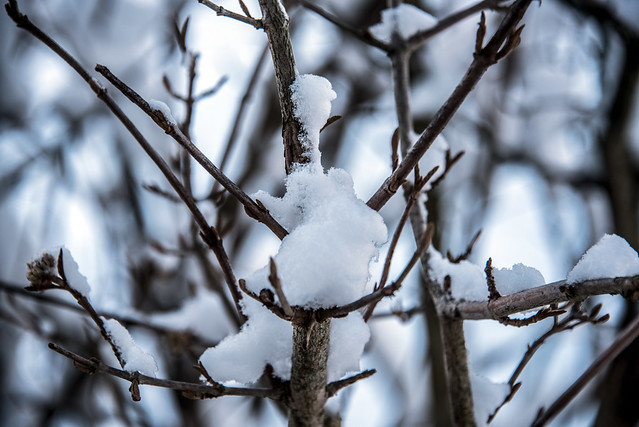 Closeup of snow in a branch crotch.