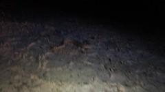 Sidewinder Rattlesnake in Mesquite Flat Campground