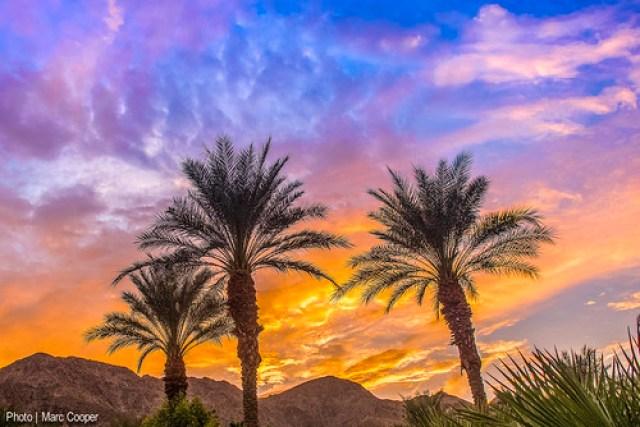 Balmy Palms
