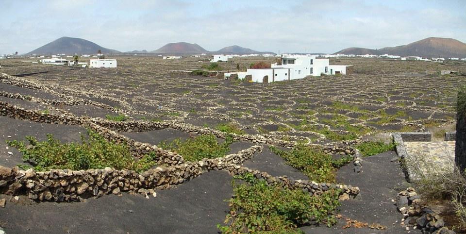 Parque Natural de La Geria Lanzarote 19