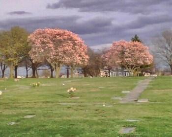 Springtime in Clifton