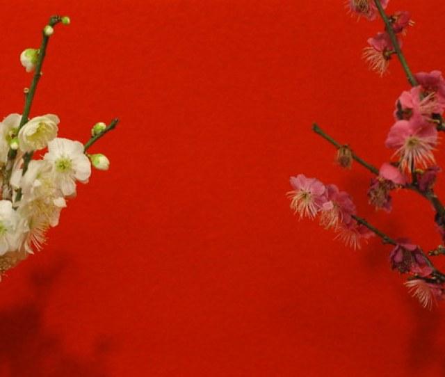 Bon Bai By Masuo F