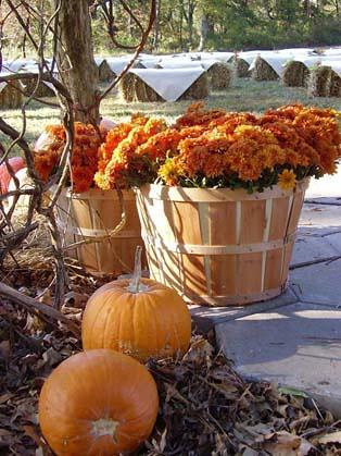 Fall Autumn Wedding Reception Tibimages Flickr