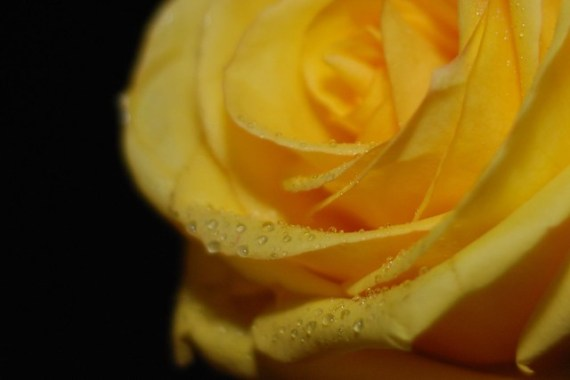 diffused flash for flower photography