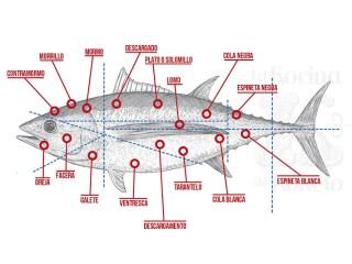Cortes del ronqueo del atún rojo