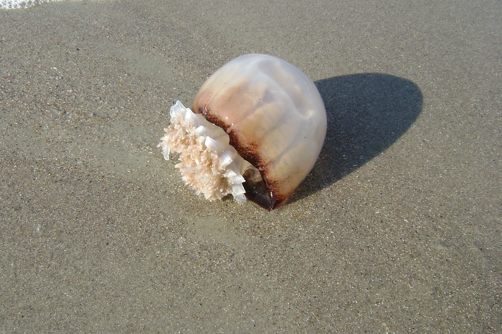 Recent Pictures Myrtle Beach