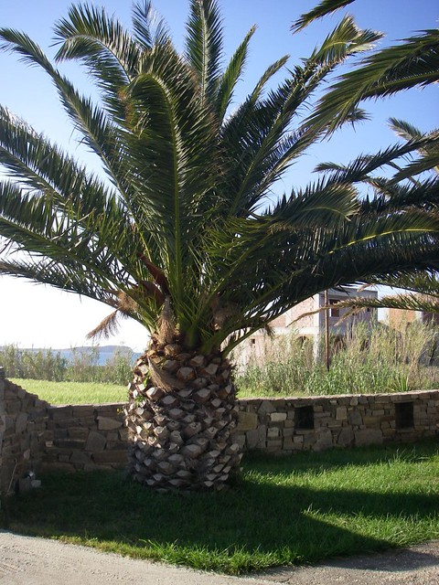 Palm Tree That Looks Like A Pineapple Gmarie1980 Flickr
