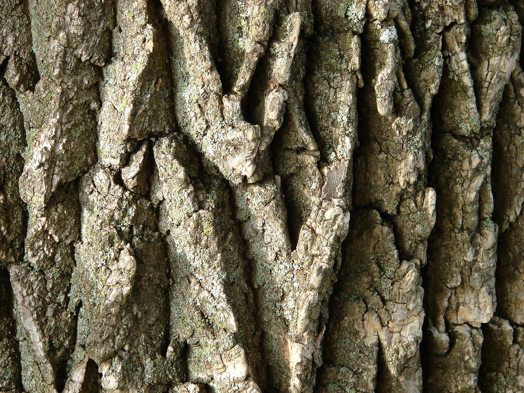 Field907 017 Tree Bark Macro These Images Have All Been Up Flickr