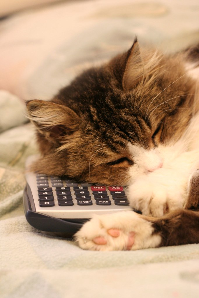 Cat And Calculator I Had A Talk With My Cat Tula About