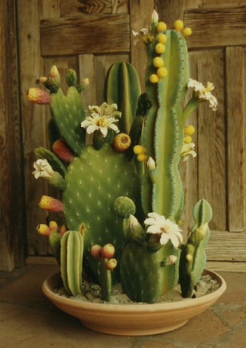 Zweifel Ceramic Cactus Made From Slip Castings Taken From Flickr
