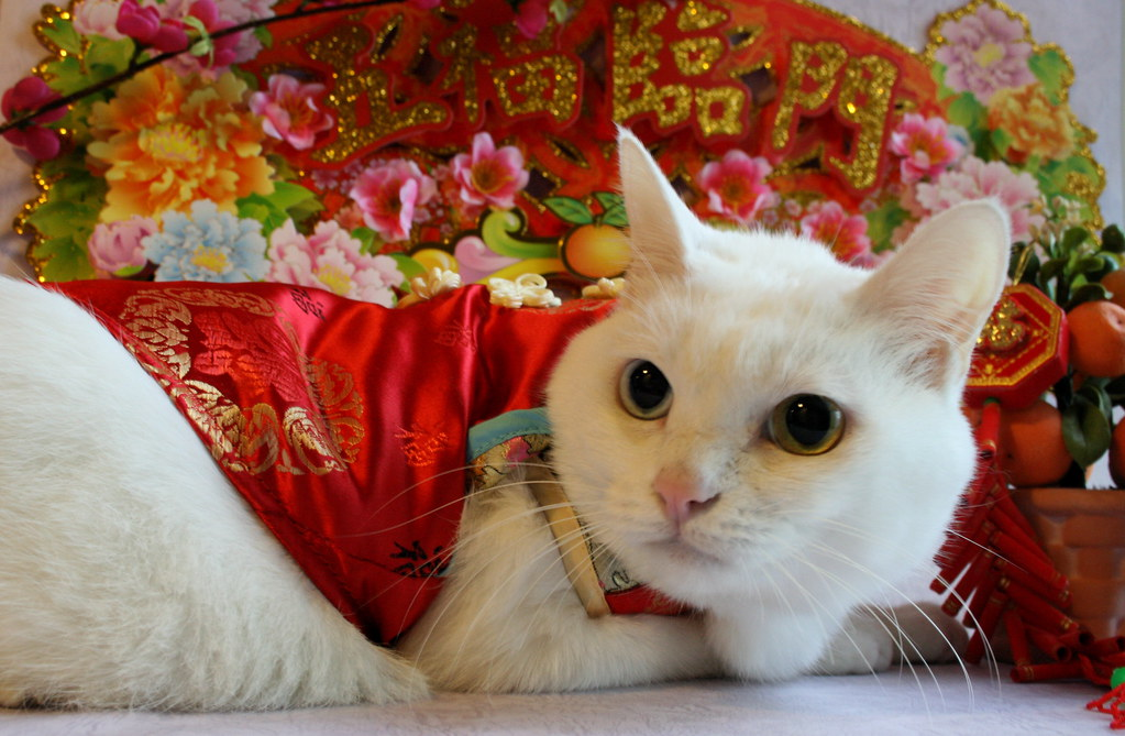 Happy Chinese New Year By The Chinese Calendar 2008 Flickr