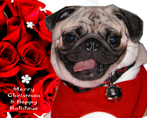 SMILING PUG MERRY CHRISTMAS Amp HAPPY HOLIDAYS CARD Flickr