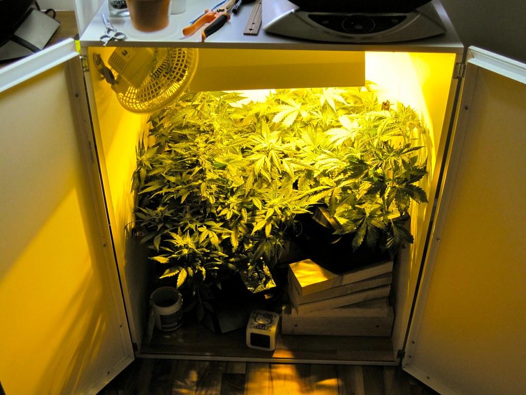 Best Hydroponic Grow Box