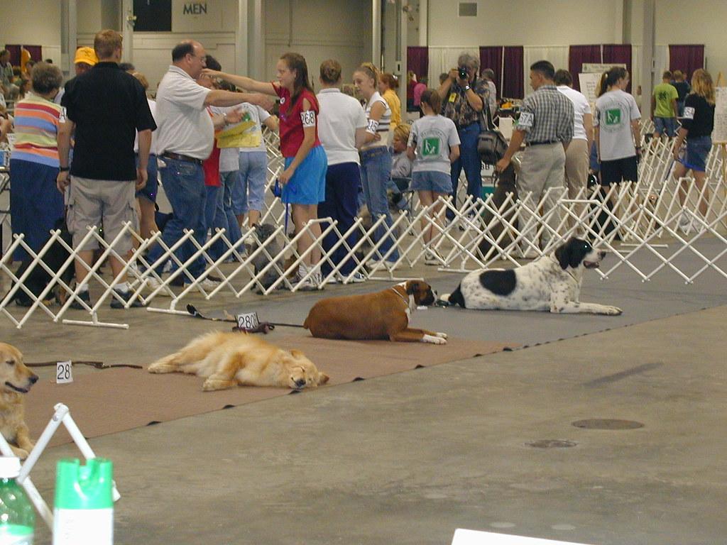 4 H Dog Show