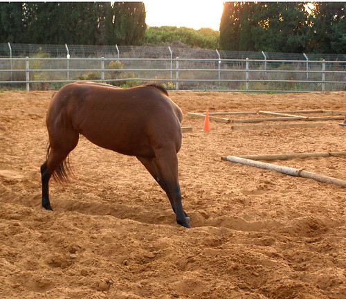 The Headless Horse Taken On A Horse Training Ranch In