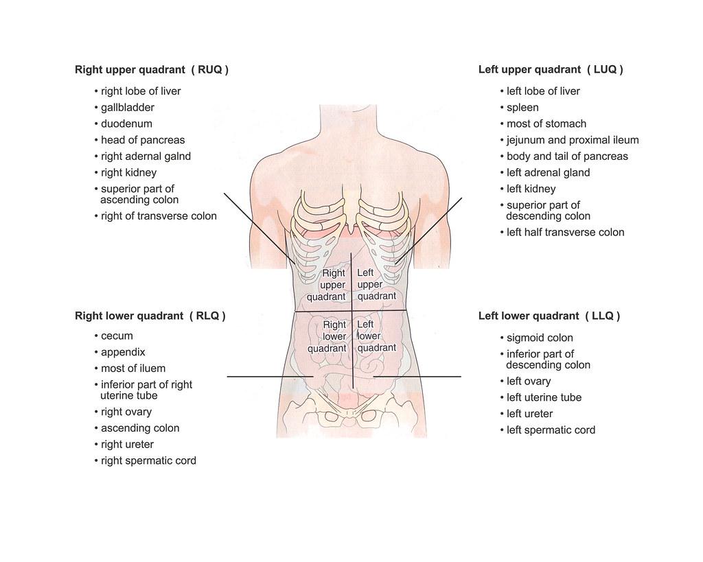 A Amp P 4 Body Quadrants