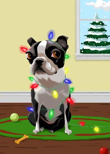 Boston Terrier Christmas Card Rubenacker Flickr
