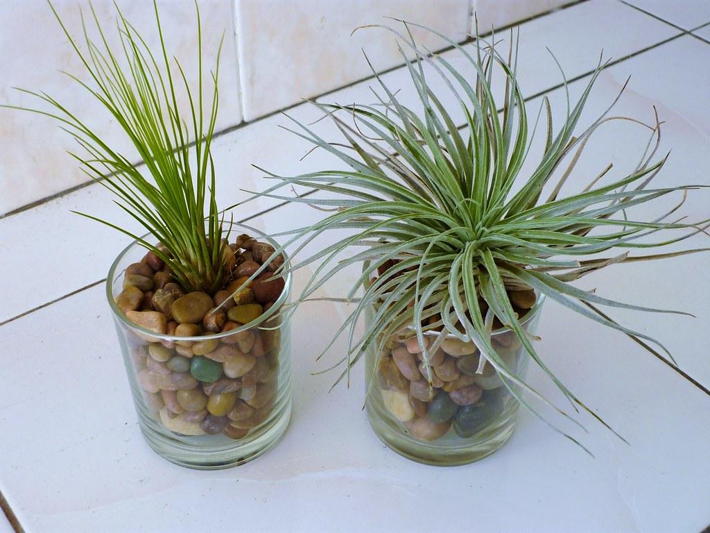 Indoor Plants Easy Care