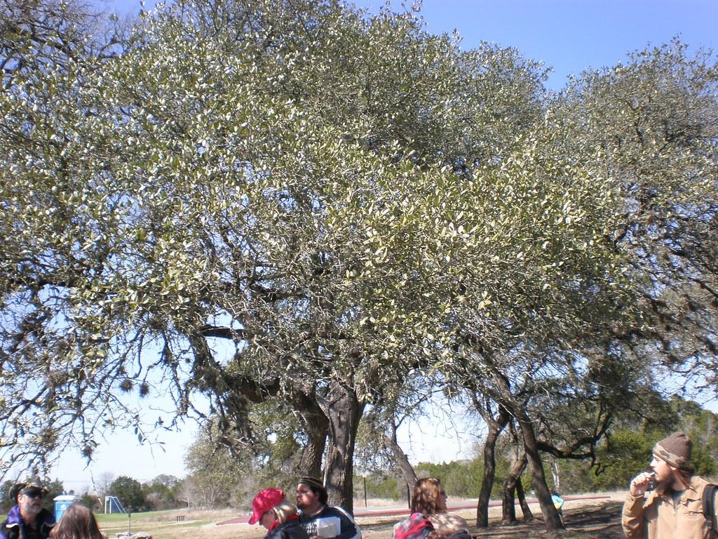 Map Texas County Oak Live