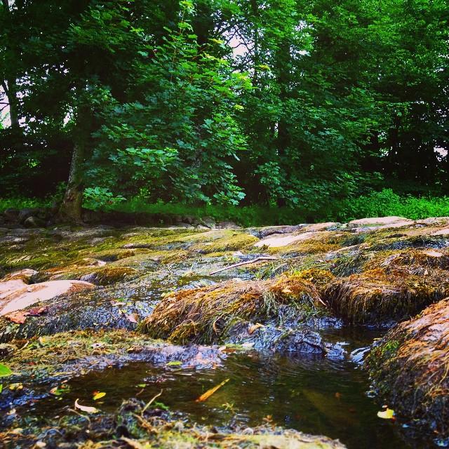 closeup of river flowing down stones in skarhult skane south sweden