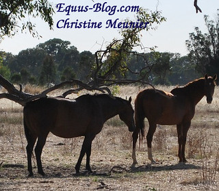 The Equine Extension Specialist | Equus Education