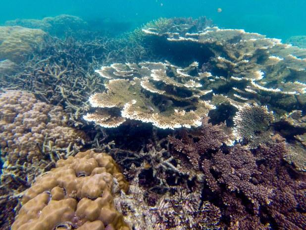 Twin Reef