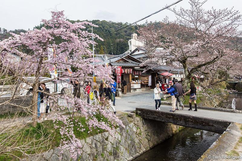 Paseo-Filosofia-Kioto-26