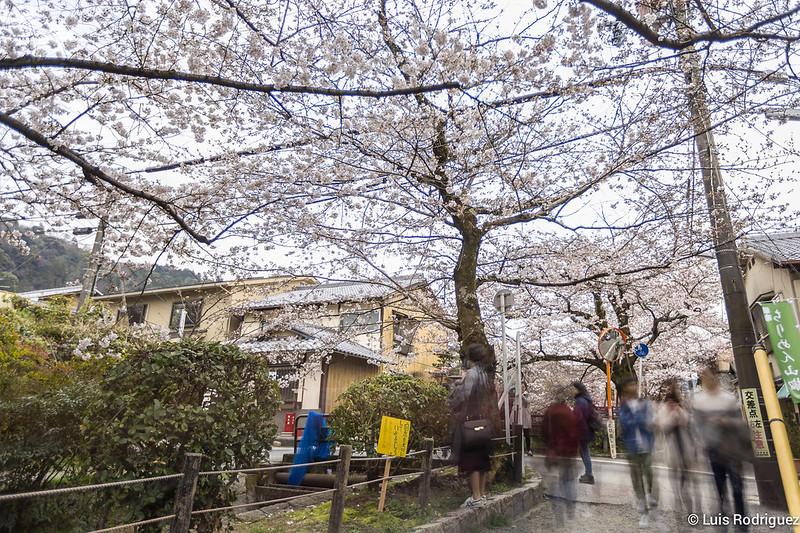 Paseo-Filosofia-Kioto-56