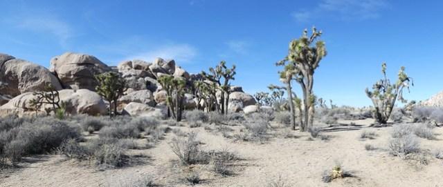 Joshua Tree National Park: Hidden Valley