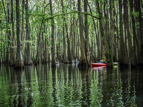 Sparkleberry Swamp-39