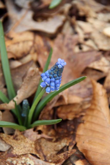 20170327_Botanic_Garden_014