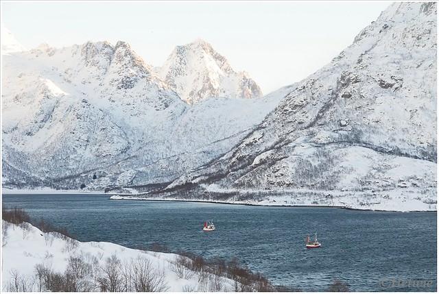 rijden langs diverse fjorden.