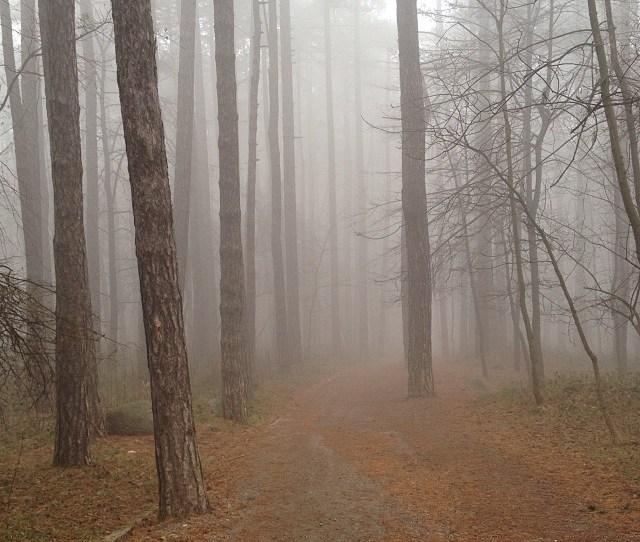 Fog Love By Magiiko