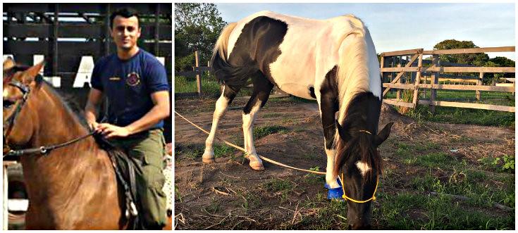 Cavalo doado ao projeto de equoterapia da PM é batizado de