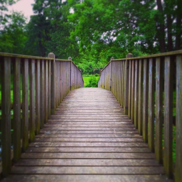 wooden bridge through green forest in skarhult skane sweden