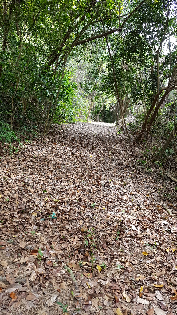 Pulau Jerejak cleared trail along northeast coast - April 2017
