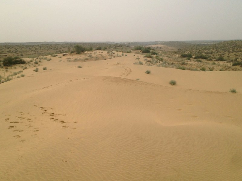wandering through the dunes in thar desert