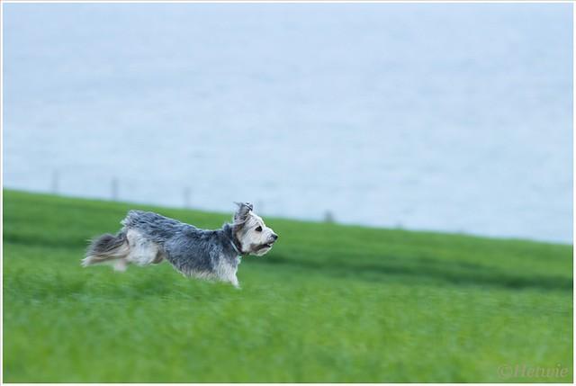 Bruc heerlijk vrij aan het rennen.