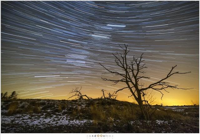 Sterrensporen waarbij het groothoek perspectief zichtbaar is door de schuine boom (Laowa 12mm f/2,8 zero-D op Canon EOS 5D mark III - f/4 - ISO3200 - t=100x 30sec)