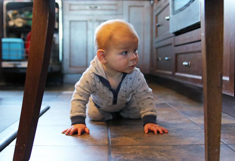 Crawling around the kitchen