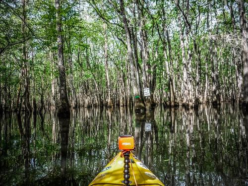 Sparkleberry Swamp-33