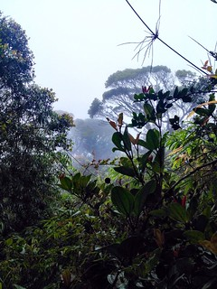 jungle trekking in cameron highlands