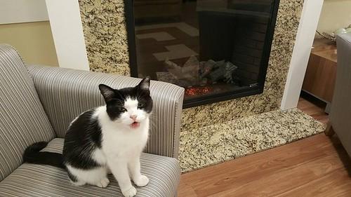 stary-cat-works-nursing-home-oreo-9