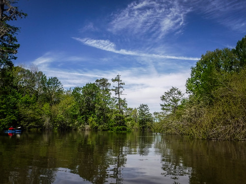 Sparkleberry Swamp-55
