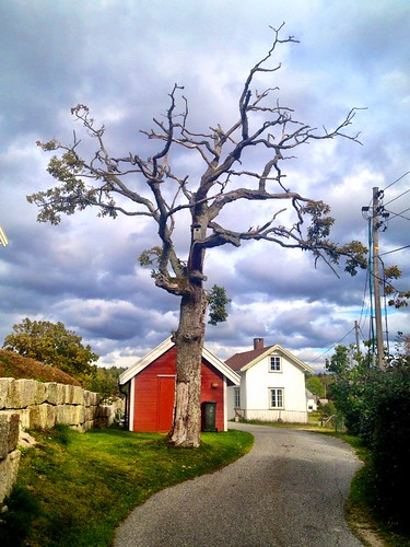 beautiful picture of large nude tree with bird house in front of cloudy sky and wooden huts in slevik south norway