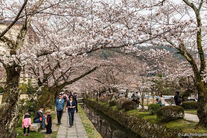 Paseo-Filosofia-Kioto-12
