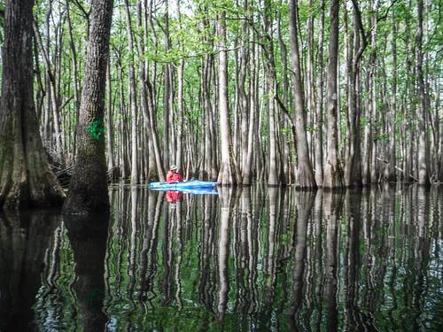 Sparkleberry Swamp-42
